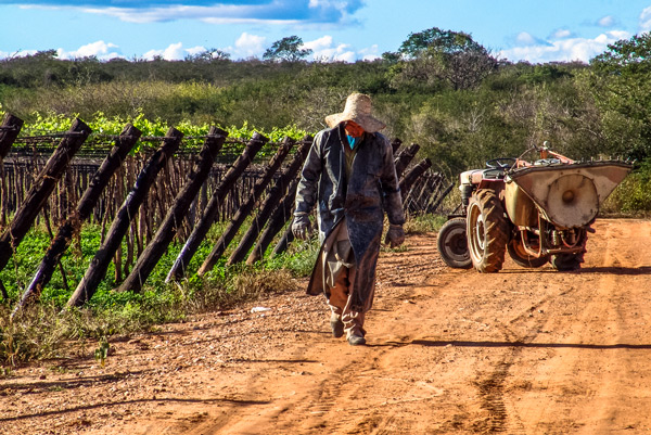 A Brazilian farmer in the S  o Francisco River Valley in Pernambuco. Photo: Depositphotos